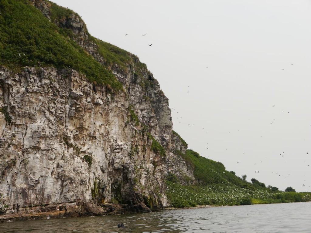 Vögelparadies