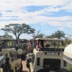 Safari42